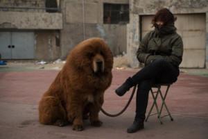 chinese zoo dog 2