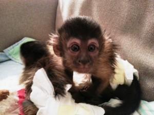stolen monkey